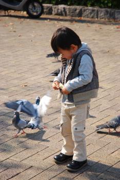 手に飛びつく鳩