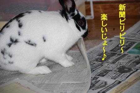 モォー新聞