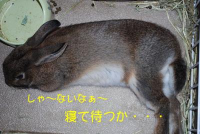 DSC_0001_20081201214643.jpg