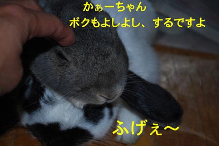 DSC_0002_20090605070217.jpg