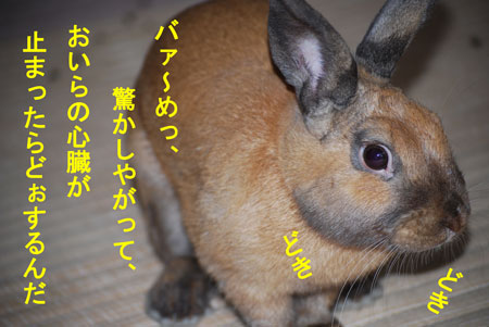 DSC_0002_20090714220308.jpg