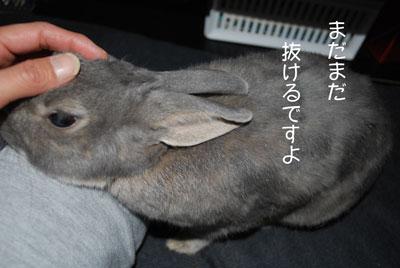 DSC_0003_20081108185956.jpg