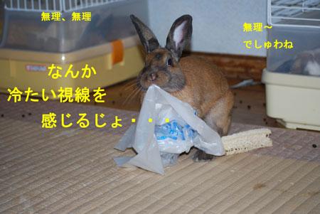 DSC_0003_20090720071137.jpg