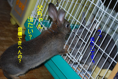 DSC_00045.jpg