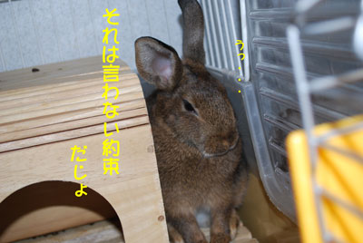 DSC_0004_20081206080610.jpg