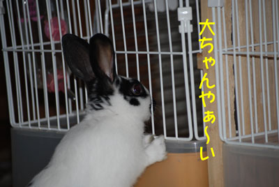 DSC_0004_20081221191813.jpg