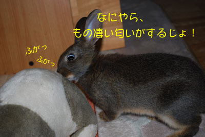 DSC_0005_20081021210452.jpg