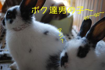 DSC_0006_20081018200520.jpg