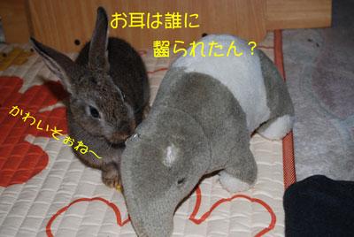 DSC_0006_20081021210459.jpg