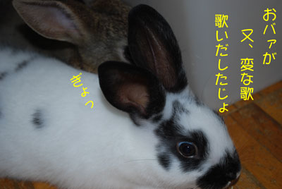 DSC_0006_20081027210457.jpg