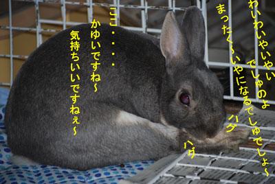 DSC_0006_20090106223354.jpg