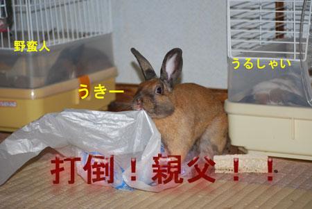 DSC_0006_20090720071137.jpg