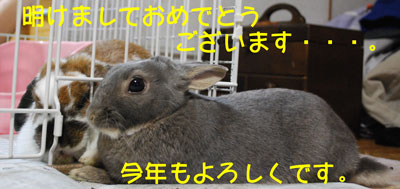 DSC_0007_20090101202819.jpg