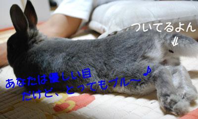 DSC_0009_20081024201528.jpg