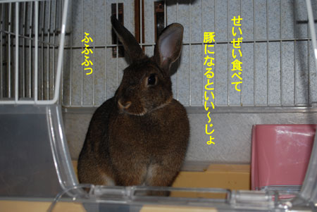 DSC_0010_20090607183658.jpg