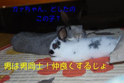 DSC_0011_20081019162034.jpg