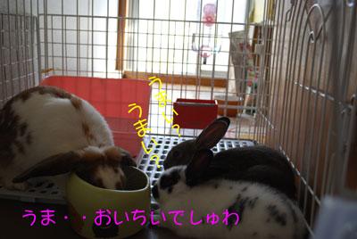 DSC_0011_20081019193626.jpg