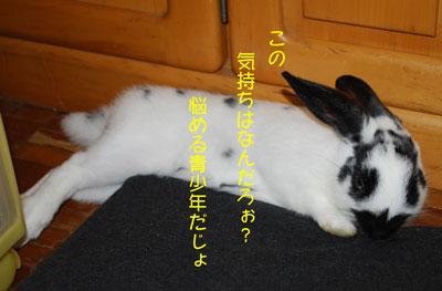 DSC_0012_20081117205803.jpg