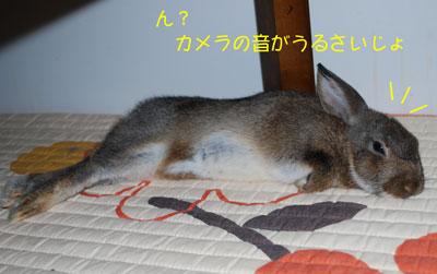 DSC_0013_20081103173057.jpg