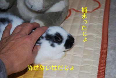DSC_0014_20081021210510.jpg