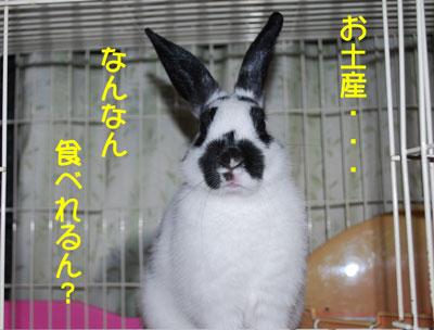 DSC_0017_20081213200937.jpg