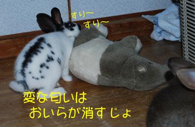 DSC_0019_20081021210516.jpg