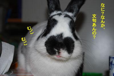 DSC_0019_20090130211946.jpg