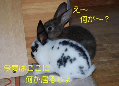 DSC_0020_20081023193051.jpg