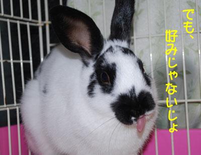 DSC_0020_20081213200942.jpg