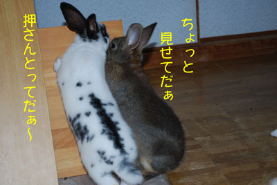 DSC_0021_20081023193100.jpg