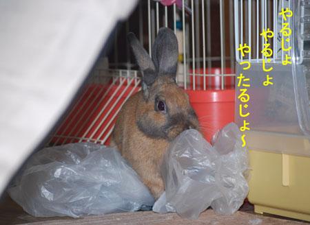 DSC_0022_20090720065459.jpg