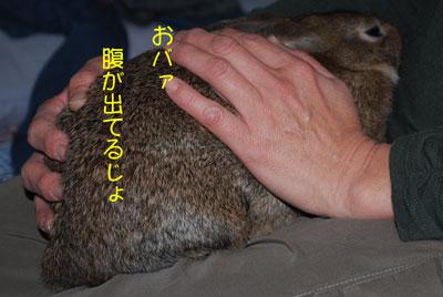 DSC_0023_20081127201329.jpg