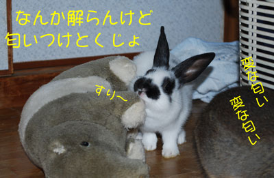 DSC_0024_20081021210524.jpg