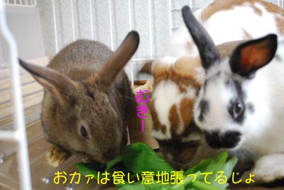 DSC_0027_20081022203209.jpg