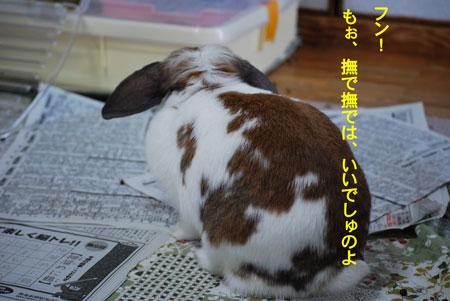 DSC_0029_20090626214319.jpg
