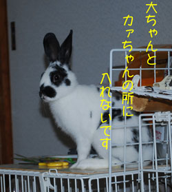 DSC_0033_20081203221428.jpg