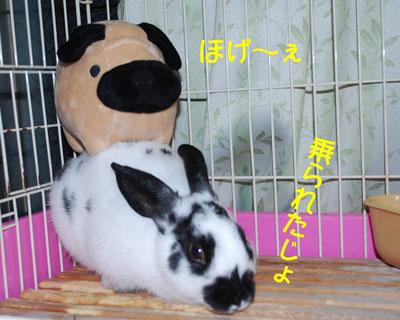 DSC_0033_20081213201002.jpg