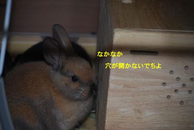 DSC_0035_20090123215302.jpg