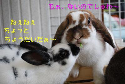 DSC_0036_20081022203329.jpg