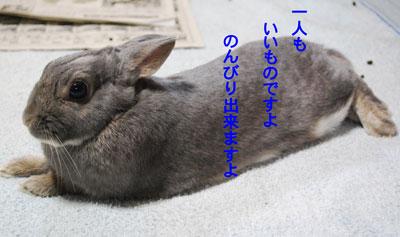 DSC_0040_20090210212822.jpg