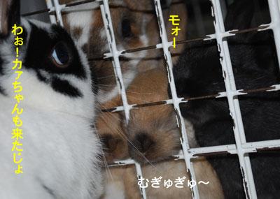 DSC_0045_20090128201004.jpg