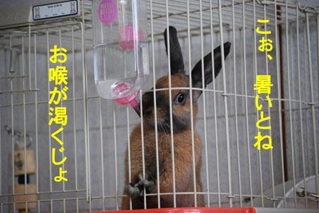 DSC_0060_20090623213614.jpg