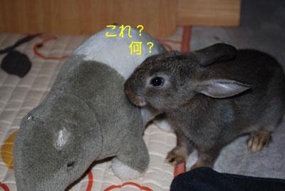 DSC_0064_20081021210555.jpg