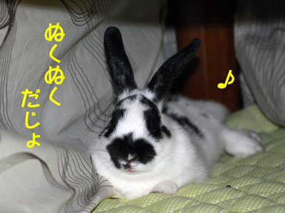 DSC_0068_20081226214752.jpg