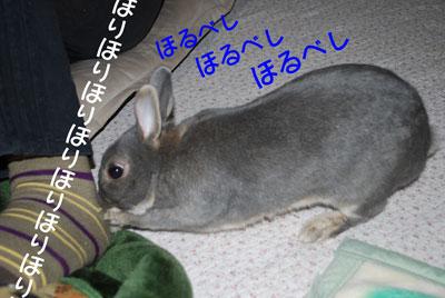 DSC_0073_20081209213238.jpg