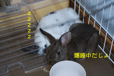 DSC_0082_20081028220424.jpg