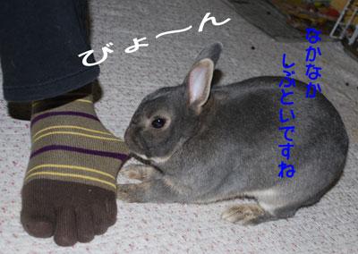 DSC_0083_20081209213319.jpg