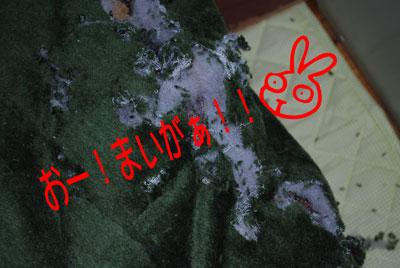DSC_0090_20081212190852.jpg