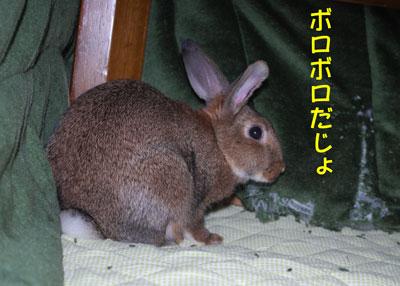 DSC_0101_20081212190911.jpg
