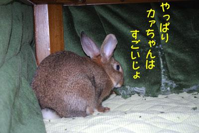 DSC_0102_20081212190917.jpg
